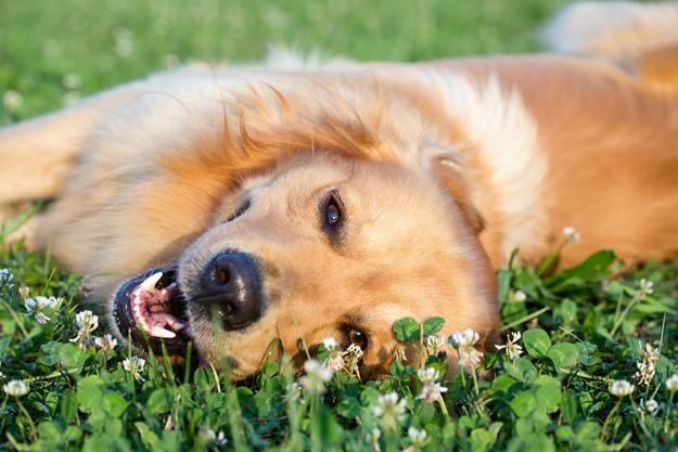 Proteger a tu mascota de los insectos